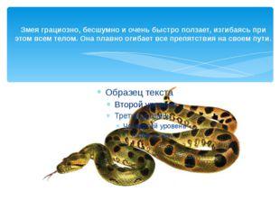 Змея грациозно, бесшумно и очень быстро ползает, изгибаясь при этом всем тело