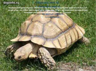 Черепаха-медлительное животное. Ну еще бы! Попробуйте двигаться быстро, когда