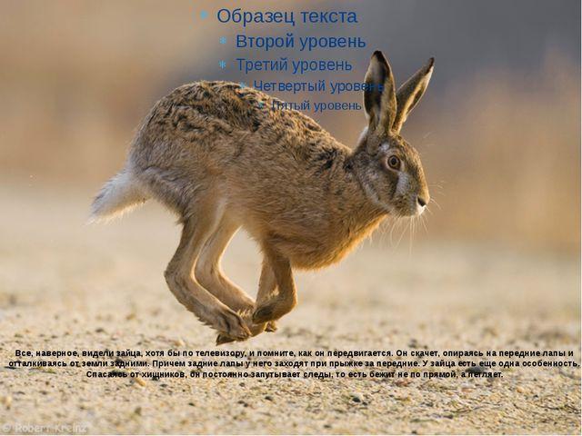 Все, наверное, видели зайца, хотя бы по телевизору, и помните, как он передви...