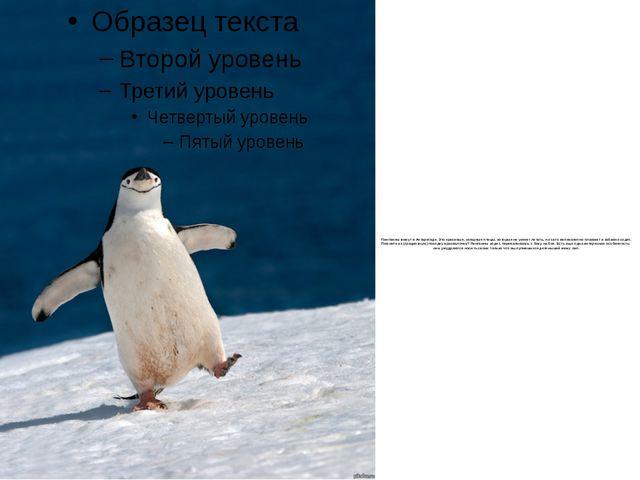 Пингвины живут в Антарктиде. Это красивые, изящные птицы, которые не умеют ле...