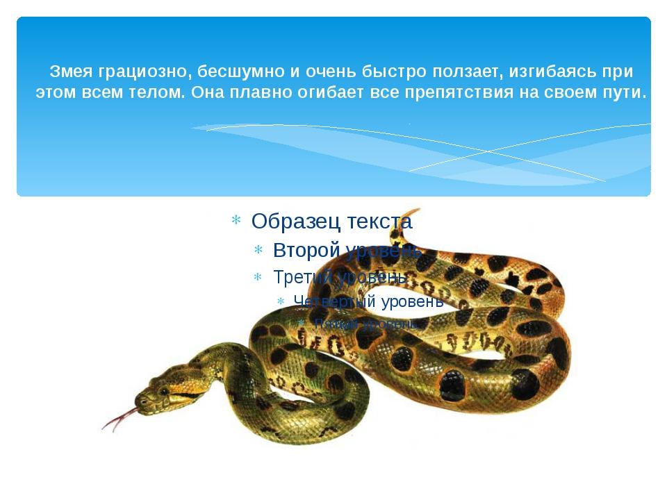 Змея грациозно, бесшумно и очень быстро ползает, изгибаясь при этом всем тело...