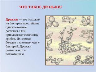 ЧТО ТАКОЕ ДРОЖЖИ? Дрожжи — это похожие на бактерии простейшие одноклеточные р