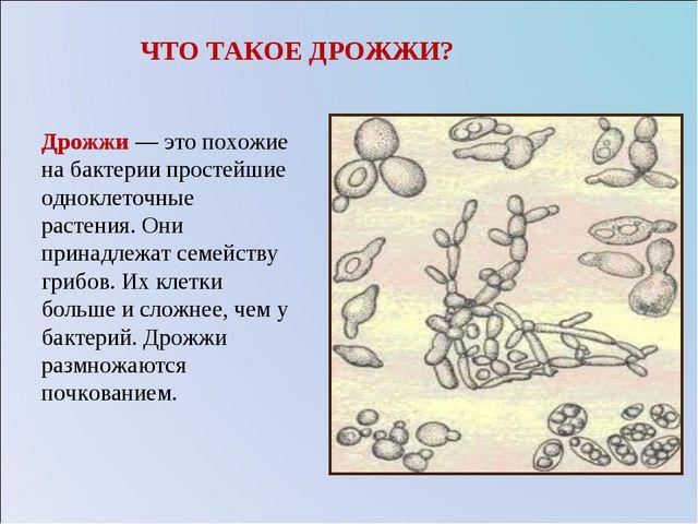 ЧТО ТАКОЕ ДРОЖЖИ? Дрожжи — это похожие на бактерии простейшие одноклеточные р...