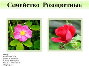 Семейство Розоцветные Автор Михайлова Г.В. учитель биологии высшей категории