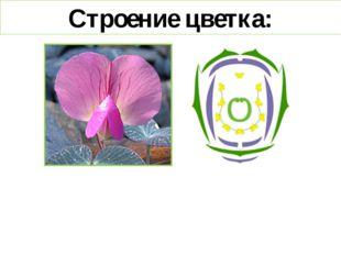 Строение цветка: