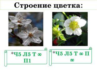Ч5 Л5 Т ∞ П1 Строение цветка: Ч5 Л5 Т ∞ П ∞