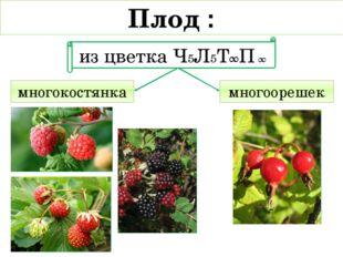многокостянка многоорешек Плод : из цветка Ч5Л5Т∞П ∞