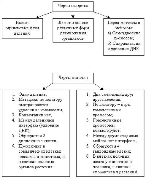 C:\Documents and Settings\Недомолкина\Мои документы\Загрузки\приказ 249 за 2013год\сходство митоза.jpg