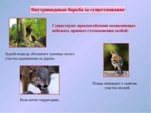 Внутривидовая борьба за существование В популяциях у животных одного вида мож