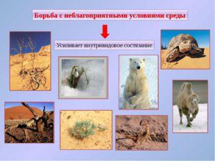 Примеры борьбы с неблагоприятными условиями окружающей среды: •Сезонная линь