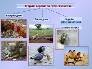 Внутривидовая борьба за существование Происходит между особями одного вида. Э