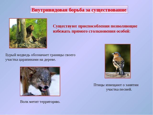Внутривидовая борьба за существование В популяциях у животных одного вида мож...