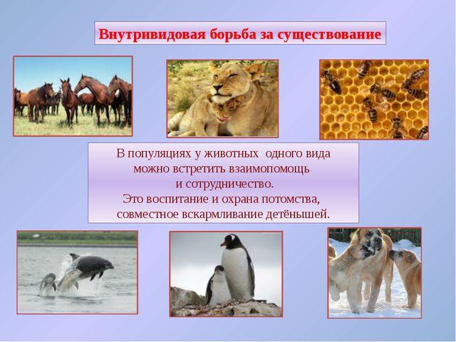 Межвидовая борьба за существование Протекает остро, если виды относятся к одн...