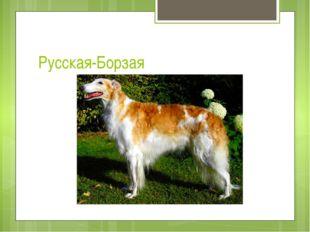Русская-Борзая