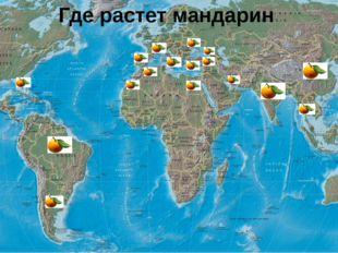 Где растет мандарин