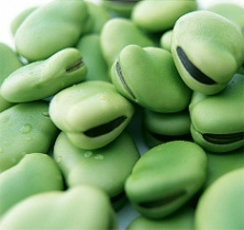 f:\123123\123\broad-beans-1.jpg