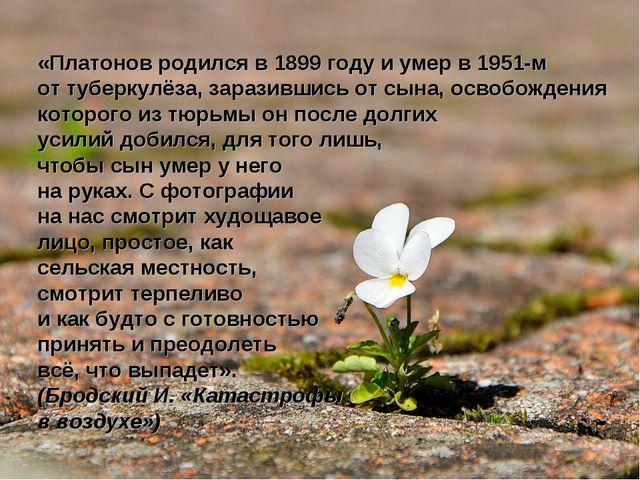 «Платонов родился в 1899 году и умер в 1951-м от туберкулёза, заразившись от...