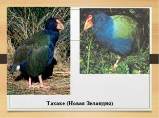 Тахаке (Новая Зеландия)