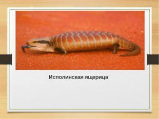Исполинская ящерица