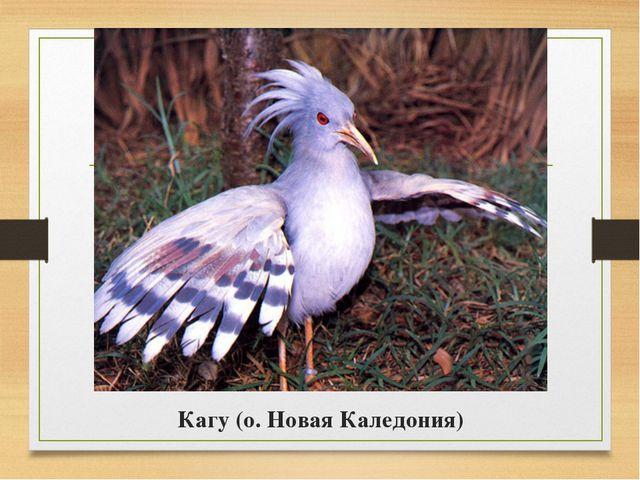 Кагу (о. Новая Каледония)
