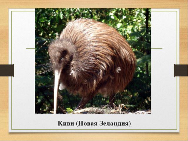 Киви (Новая Зеландия)