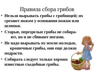 Правила сбора грибов Нельзя вырывать грибы с грибницей; их срезают ножом у ос