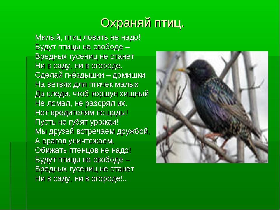 Охраняй птиц. Милый, птиц ловить не надо! Будут птицы на свободе – Вредных гу...