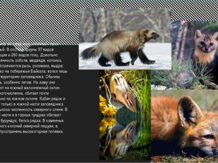 Животный мир заповедника типичный горно-южнотаежный. В составе фауны 37 вид