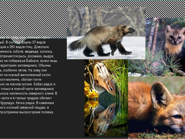 Животный мир заповедника типичный горно-южнотаежный. В составе фауны 37 вид...