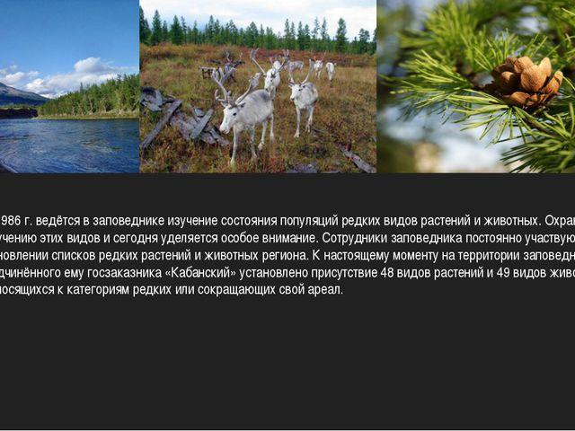 С 1986 г. ведётся в заповеднике изучение состояния популяций редких видов ра...