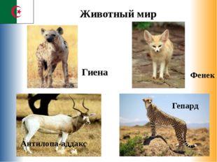 Гепард Фенек Гиена Антилопа-аддакс Животный мир