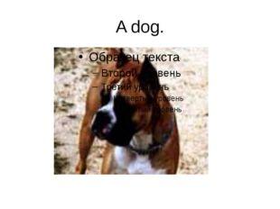 A dog.