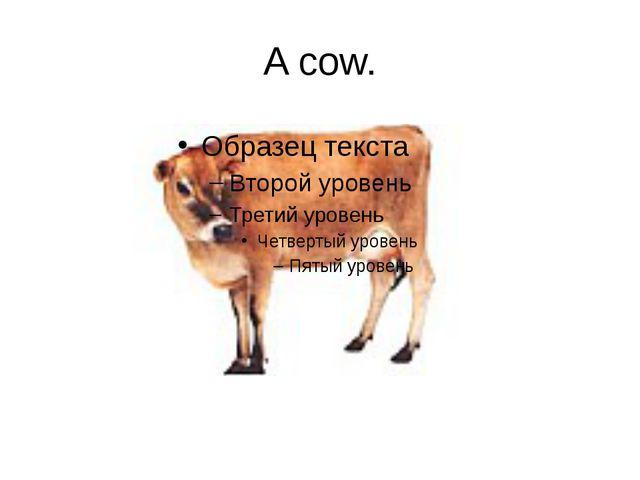 A cow.