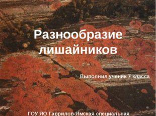 Разнообразие лишайников Выполнил ученик 7 класса ГОУ ЯО Гаврилов-Ямская специ