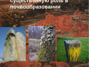Лишайники растут на почве, гнилой древесине, горных породах, играют существе