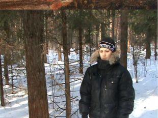 Лишайники в лесу вокруг школы-интерната