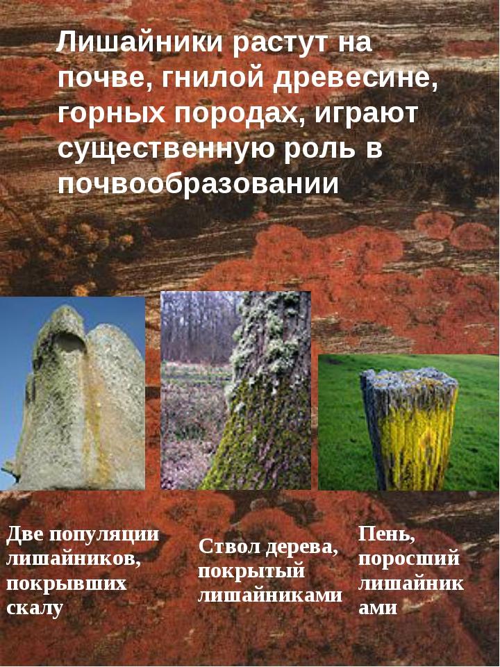 Лишайники растут на почве, гнилой древесине, горных породах, играют существе...