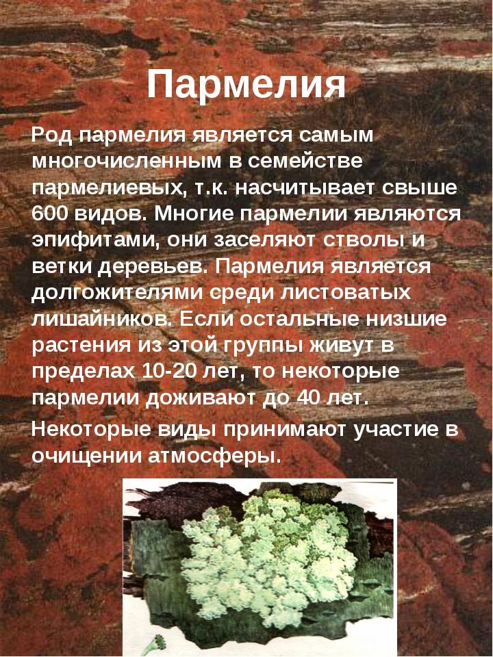 Пармелия Род пармелия является самым многочисленным в семействе пармелиевых,...