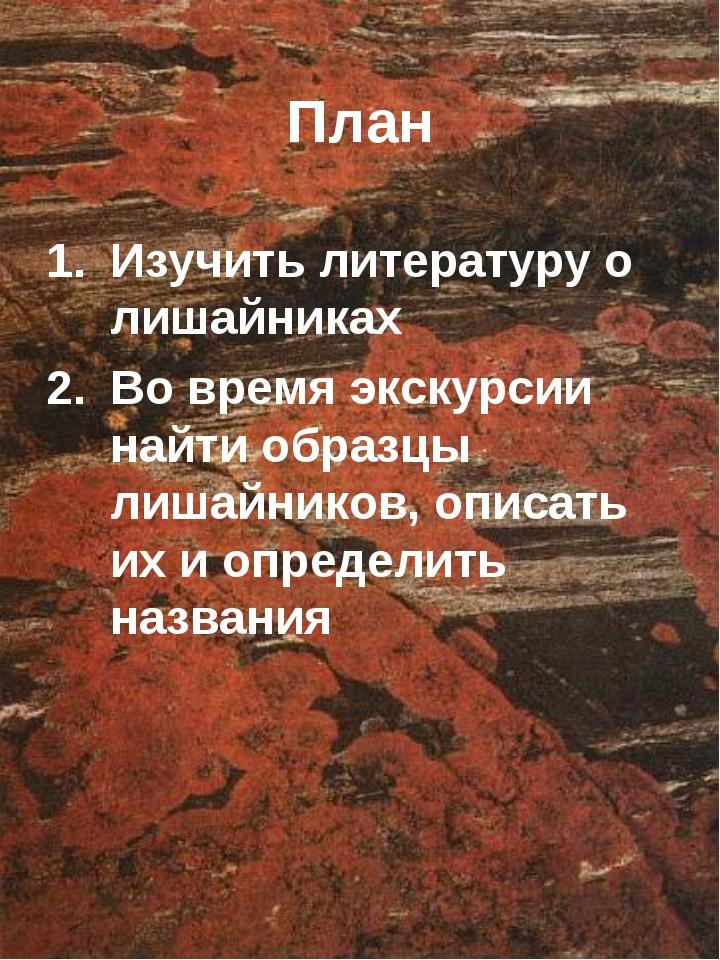 План Изучить литературу о лишайниках Во время экскурсии найти образцы лишайни...
