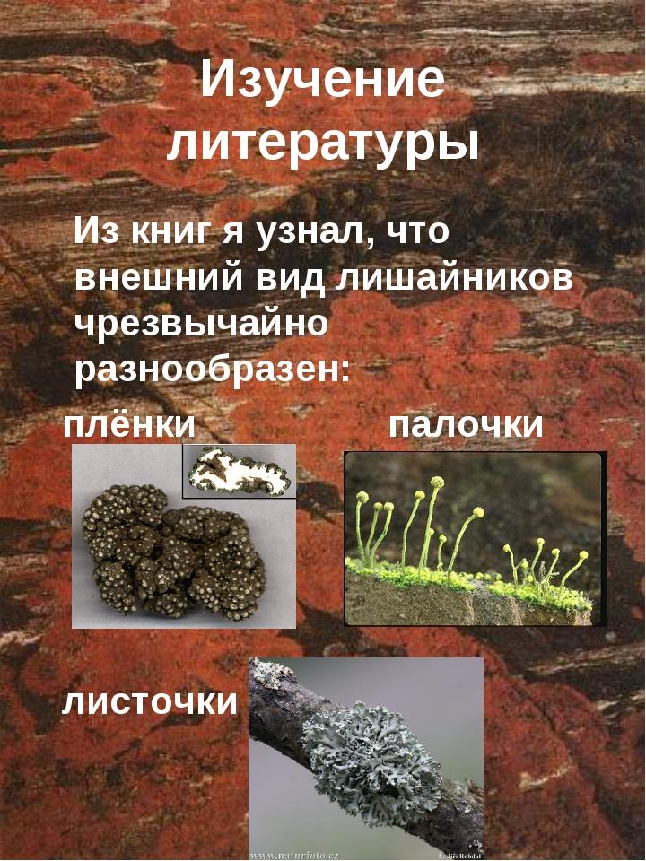 Изучение литературы Из книг я узнал, что внешний вид лишайников чрезвычайно р...