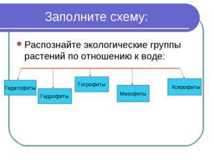 Заполните схему: Распознайте экологические группы растений по отношению к во