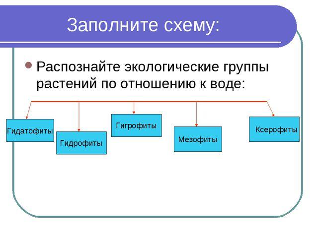Заполните схему: Распознайте экологические группы растений по отношению к во...