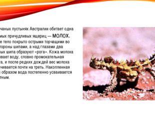 В песчаных пустынях Австралии обитает одна из самых причудливых ящериц — мол
