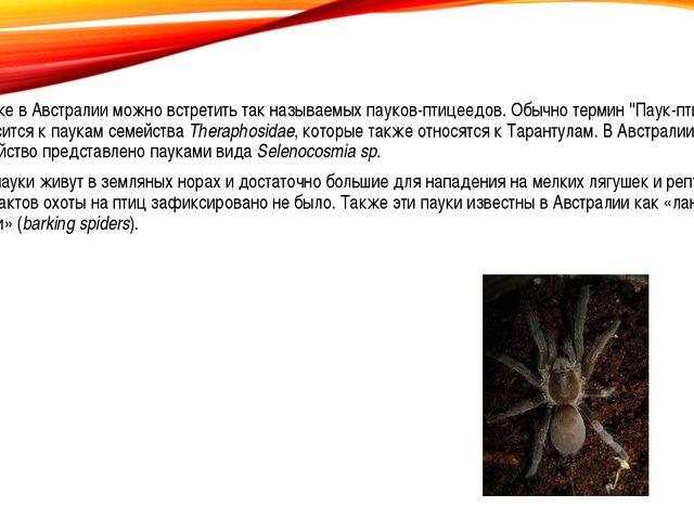 Так же в Австралии можно встретить так называемых пауков-птицеедов. Обычнот...