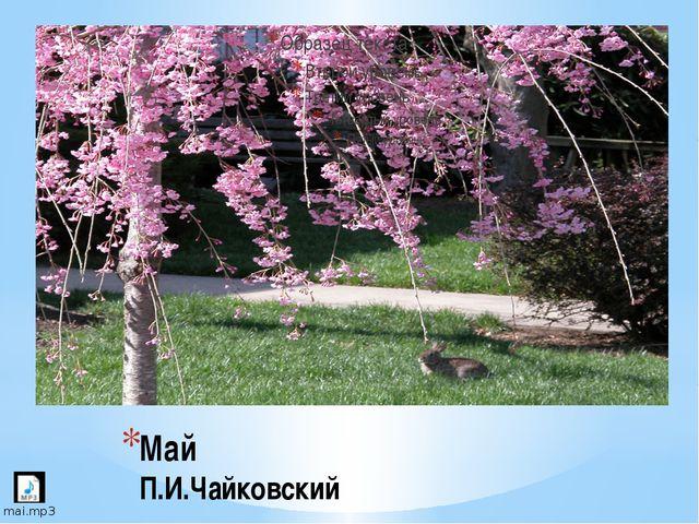 Май П.И.Чайковский 1