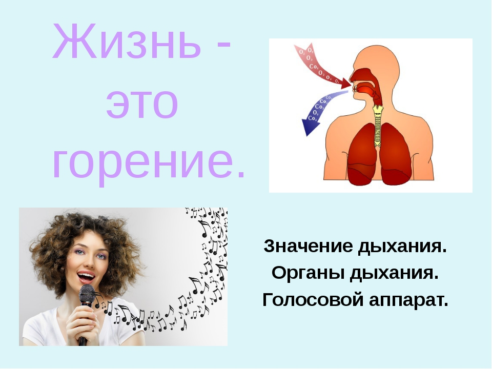 Значение дыхания. Органы дыхания. Голосовой аппарат. Жизнь - это горение.