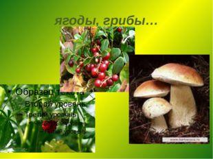 ягоды, грибы…
