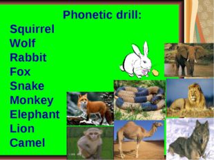 Phonetic drill: Squirrel Wolf Rabbit Fox Snake Monkey Elephant Lion Camel