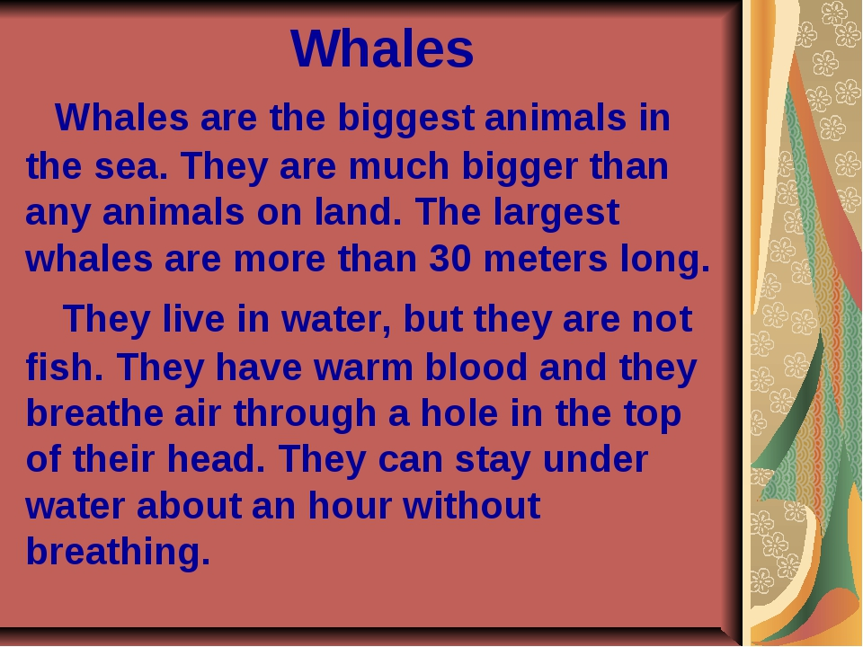 Whales Whales are the biggest animals in the sea. They are much bigger than...