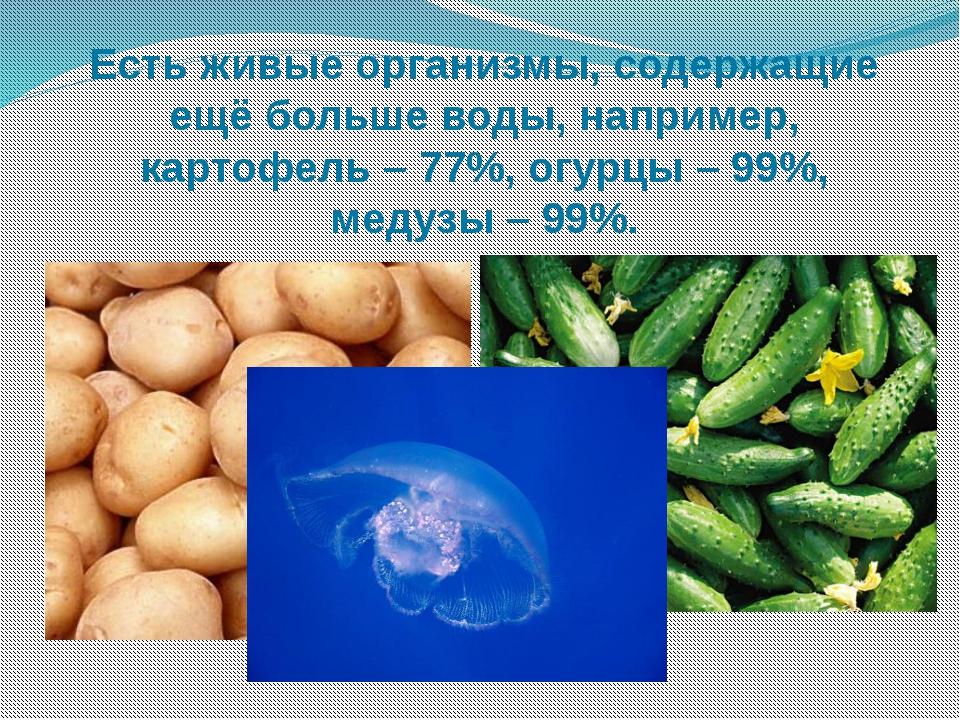 Есть живые организмы, содержащие ещё больше воды, например, картофель – 77%,...